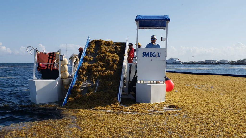 Barcaza recolectora de sargazo, recolectando sargazo en las costas de Puerto Morelos